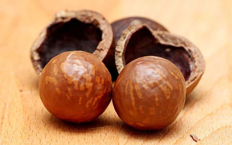 The Amazing Benefits of Macadamia Nuts